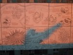 Comorant Cove sealife tiles