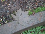 Nora's bronze leaf